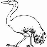 Emu Coloring Printable Pages Getdrawings Getcolorings sketch template