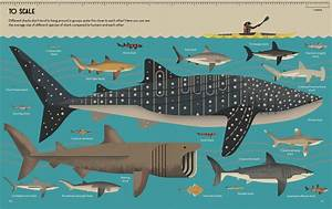 Smart About Sharks  A Great New Children U0026 39 S Book From