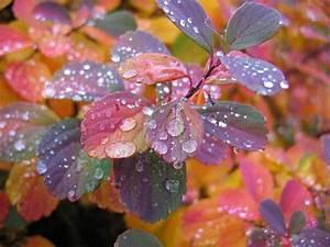 Beautiful Wallpapers: Beautiful Rain Wallpapers for your ...