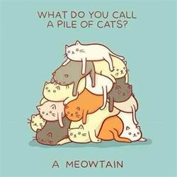 cat puns what do you call a pile of cats jokes memes pictures