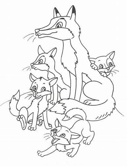 Colorear Fox Coloring Dibujos Zorro Animal раскраска