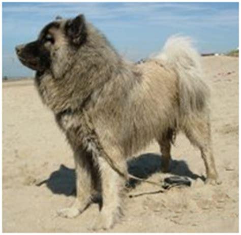 eurasian care  lot pet supply