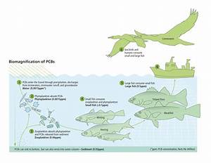 Bioaccumulation Diagram  U00ab Long Island Sound Study
