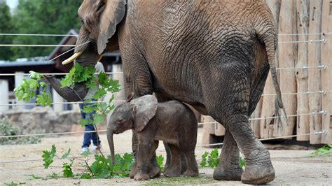 tierzucht im zoo zuchtprogramme tierzucht im zoo tier