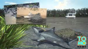 Crocodile vs shark Brutus the giant one armed crocodile catches shark ...