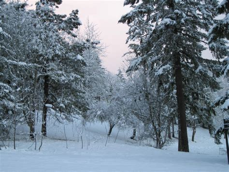 file snow in eugene jpg wikimedia commons