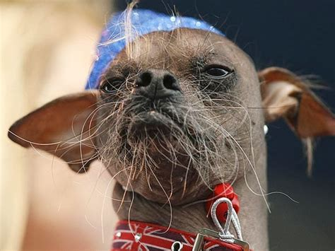 most famous dogs worlds ugliest dogs