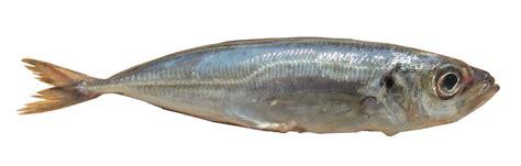 cuisine saveur les poissons cuisine à l 39 ouest