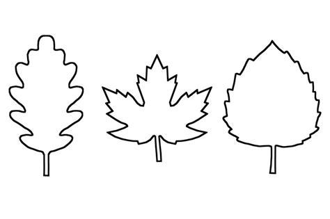 leaf template  printable leaf outlines