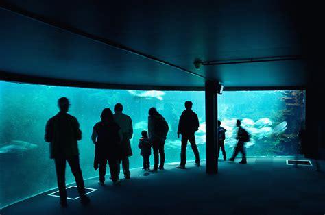 aquarium boulogne sur mer tarif visiter le nord pas de calais 1 les c 244 tes visiter la