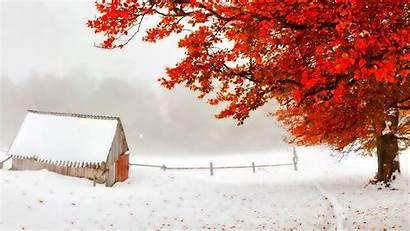 Winter Autumn Desktop Snow Early Backgrounds Tree