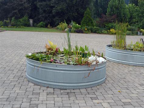 crazy cool container gardens hgtv