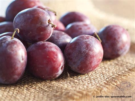 recette cuisine simple crumble de prunes rouges jardin des gourmandsjardin des