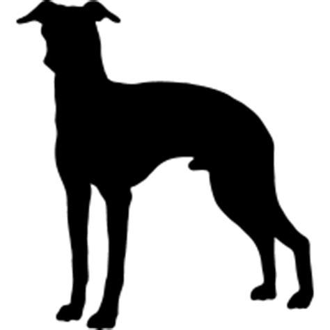foto de Italian Greyhound 2