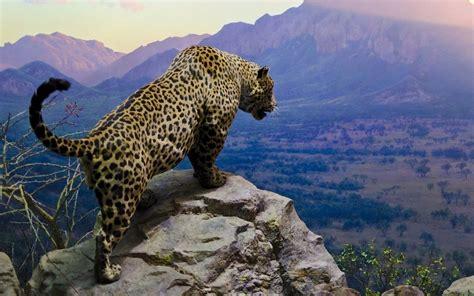 3d Wallpaper Animals Desktop - jaguar animal desktop wallpapers this wallpaper