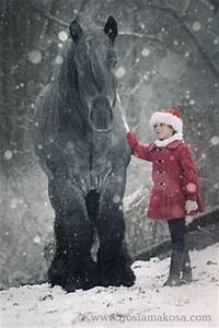 1000 ideas about Belgian Draft Horses on Pinterest