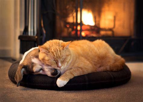 dog  cat  fireplace animal haven