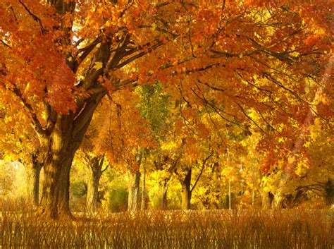 Free Animated Autumn Wallpaper - fall season animated wallpaper 1 0 0 screenshot