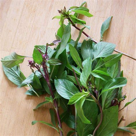 les herbes aromatiques en cuisine plantes aromatiques pour cuisine photos de design d