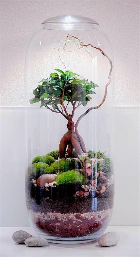 comment faire  terrarium humide en  etapes comment