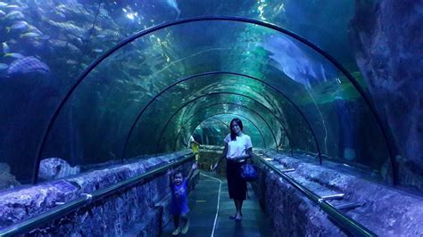 jakarta aquarium promo tiket masuk wisata jakarta