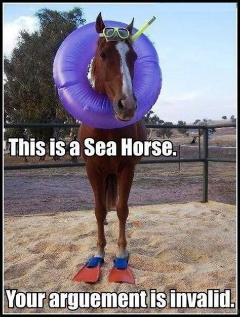 Gay Horse Meme - 83 foolish horse memes