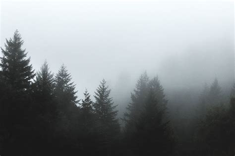 Forest, Tree, Clouds, Fog, Pine Tree