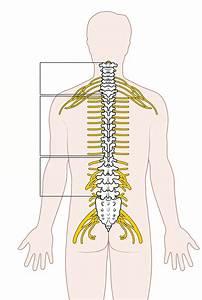 Complications Of Syringomyelia