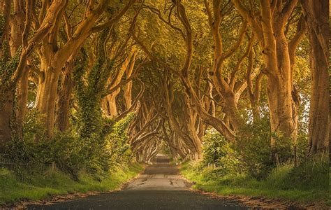 Background Images Of Trees by Ireland Trees Green Road Grass Fence Shrubs