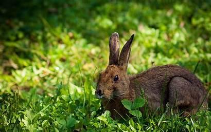 Rabbit Desktop Wallpapers 4k