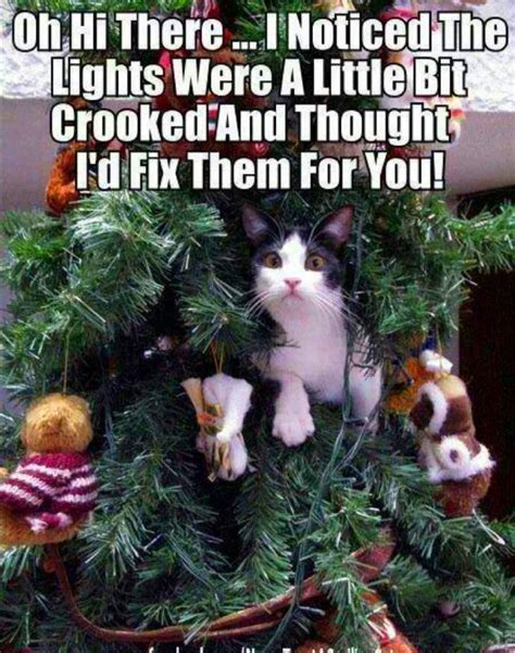 cat in christmas tree meme