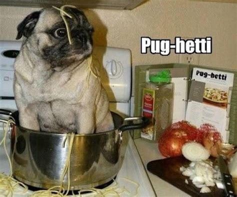 furry memes   favorite pets  pics izismilecom