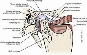 29  Temporomandibular Joint