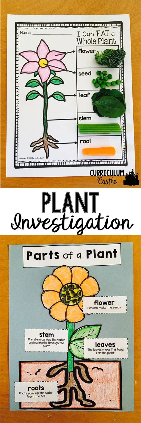 plant investigation unit all about plants cycle and