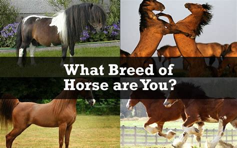horse clydesdale horses quiz breed thoroughbred quizzes perfect cute kinda crazy kind breeds collect nobleoutfitters
