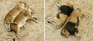 Nat Hab Staff at Colorado's Wild Animal Sanctuary
