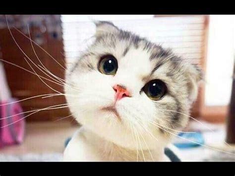 funny cats compilation  cat fails  funny pets