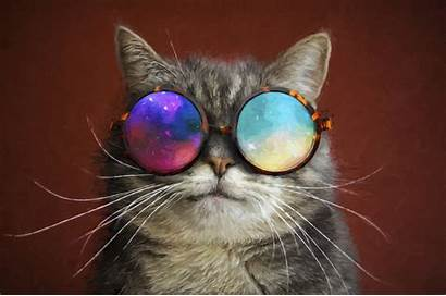 Cat Painting Cool Glasses Wallpapers Party 4k