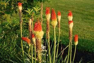 Fleur De Lys Plante : images gratuites prairie fleur t botanique ~ Melissatoandfro.com Idées de Décoration