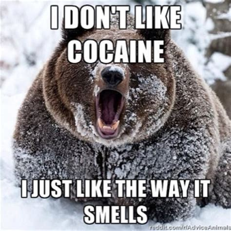 Bear Cocaine Meme - bear cocaine meme 28 images cocaine bear meme memes image 103277 cocaine bear know your