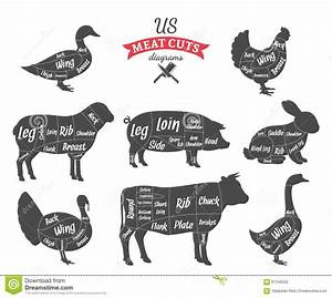 American Us Meat Cuts Diagrams Stock Vector Image