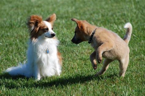 le chauffante pour chiot mode de garde chiens et chats le du p canin
