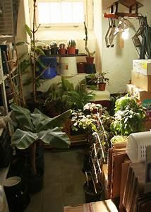 Hortensien überwintern Im Keller : einr umen der k belpflanzen majas pflanzenblog ~ Frokenaadalensverden.com Haus und Dekorationen