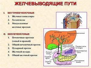 Для восстановления печени и поджелудочной железы