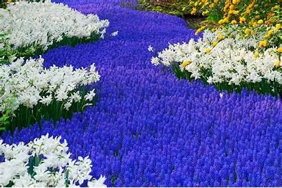 Flower Garden Forest Cool Wallpapers Wonderful Flowers