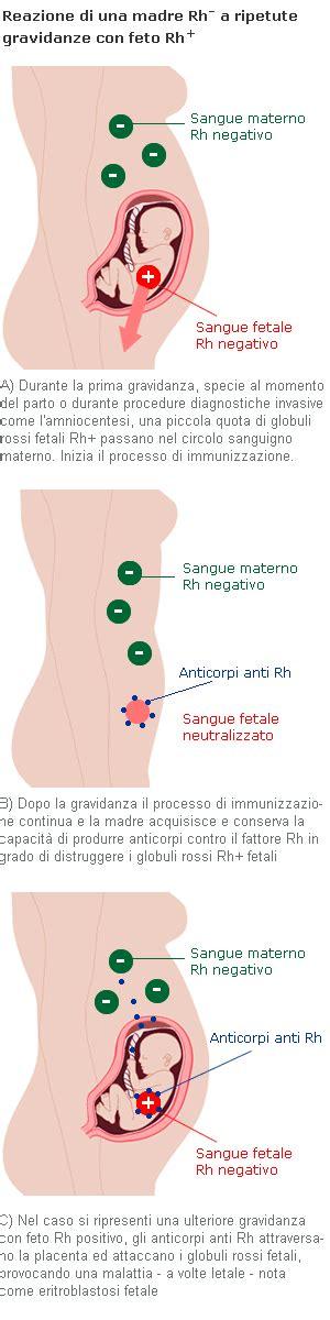 test  coombs  gravidanza