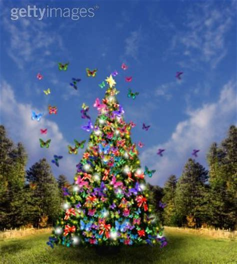 butterfly christmas tree bright colors photo 17593610
