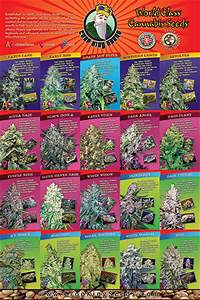 Crop King Seeds Presents The World U0026 39 S First Full Production