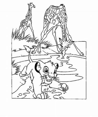 Lion King Coloring Pages Animated Last Gifs