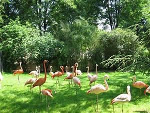 Flamant Rose Jardin : jardin des plantes la beaut de la nature au c ur de paris ~ Teatrodelosmanantiales.com Idées de Décoration